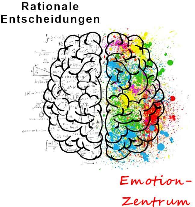 Ex Freund zurück - rationale und emotionale Gehirnhälften